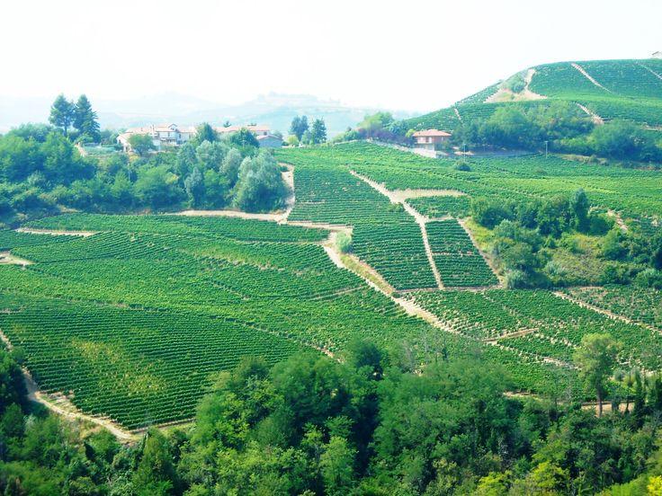 Vineyards, from the trails taken during the Trail del Moscato races   Sentieri e strade del Trail del Moscato