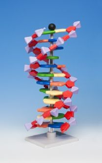 molymod - The original dual-scale system of Molecular Models - DNA RNA