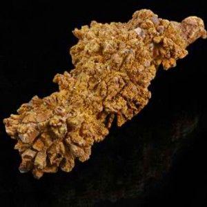 12 Coprolite Fossil Specimen