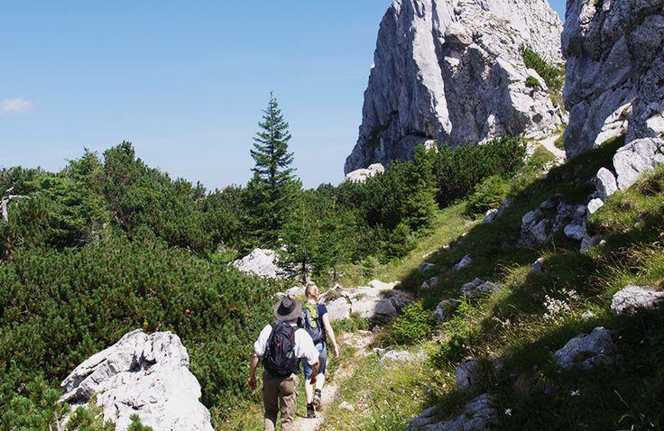Ein absolutes #Wandererlebnis bietet der #Pürschling. Er ist mit seinen knapp 700 Höhenmetern auch für #Anfänger geeignet und bietet eine herrliche Sicht auf die #Ammergaueralpen.  http://www.hotel-fuessen.de/de/
