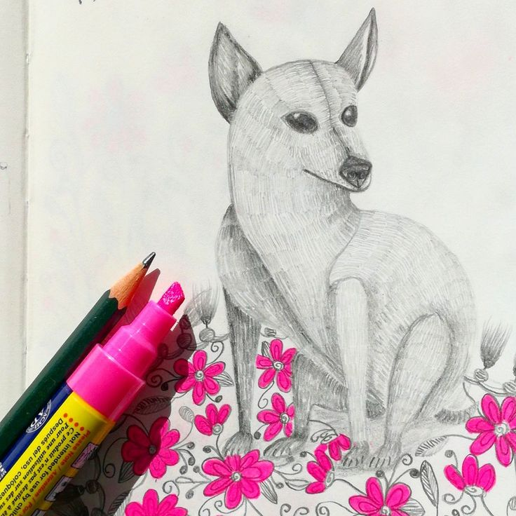 Pencil and posca illustration mexican dog