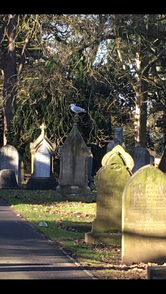 Thornaby cemetery