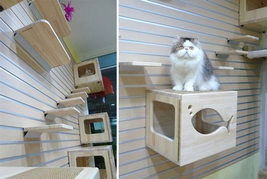 Cat stuff!: Cat Rooms, Cat Projects, Cat Photo, Cat Boxes, Cat Stuff, Cat Dogs Crafts, Cat Products, Cat Climbing Wall, Cat Perch