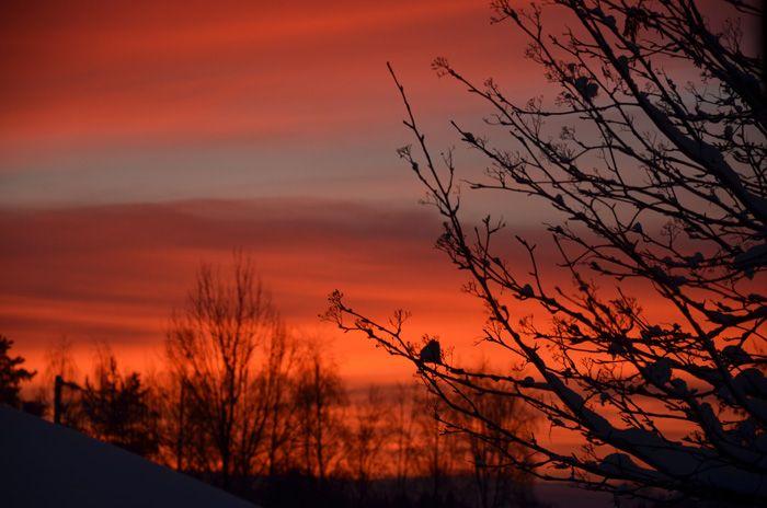 Soluppgång ~ Sunrise