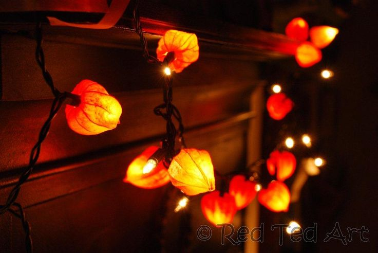 I've been saving up stray Japanese lantern pods to make one of these strings of lights...any interest?