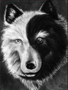 which wolf