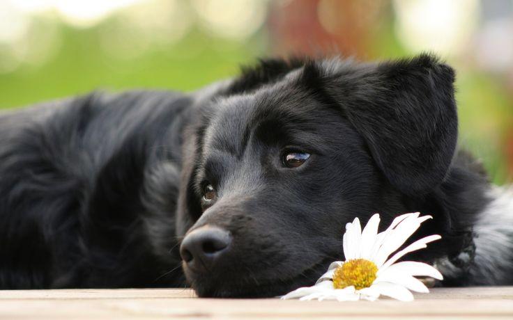 puppy desktop background pictures free