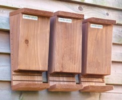 Bat Box - Triple Pack
