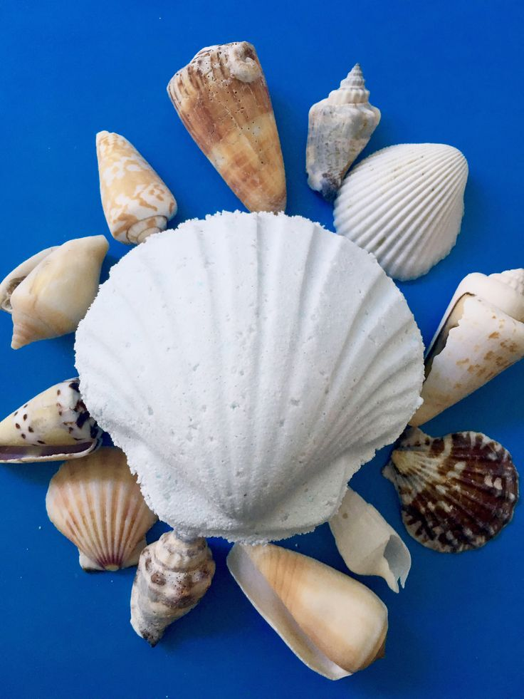 Sea Shell Bath Bomb, Unisex Bath Bomb, Surprise Shell Inside!, Ladies Bath Bomb, Gift For Her, Sea Salt Bath Bomb, Seaside Bath Bomb, UK by FizzyFriendsBathBomb on Etsy https://www.etsy.com/uk/listing/531975671/sea-shell-bath-bomb-unisex-bath-bomb