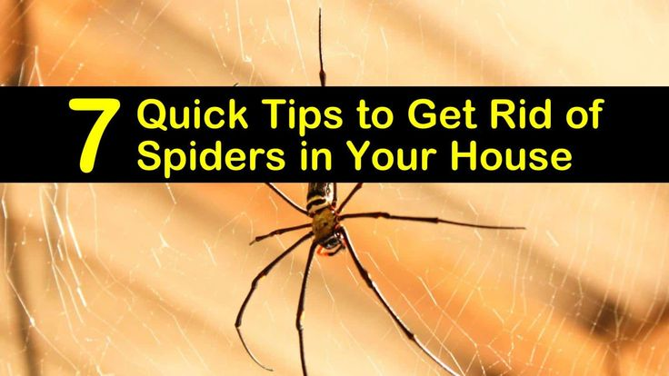 7 quick tips to get rid of spiders in your house get rid