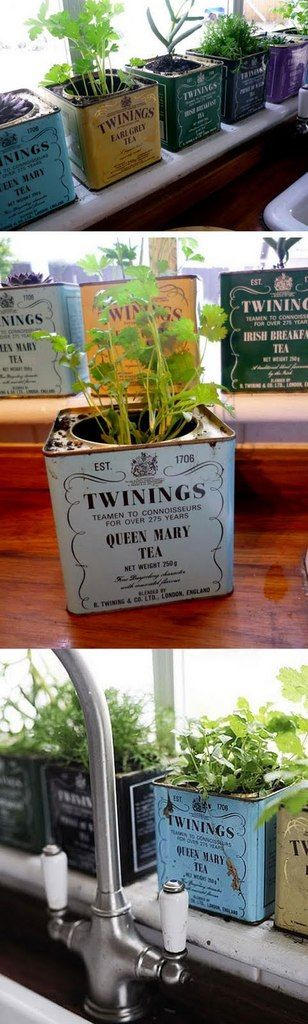 Grow herbs and small indoor plants on your windowsill in old tea tins!