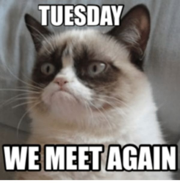 50 Funny Happy Tuesday Memes And Pictures Funny Tuesday Meme Tuesday Humor Happy Tuesday Meme