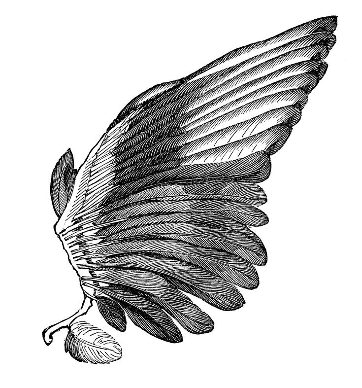 Vintage Angel Clip Art Free | Vintage Clip Art Image – Feather Wings – For Angels