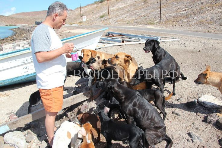 34 собаки благодарны этим людям  http://xn----dtbjxcjfbus6gj.xn--p1ai/volunteers/34-%d1%81%d0%be%d0%b1%d0%b0%d0%ba%d0%b8-%d0%b1%d0%bb%d0%b0%d0%b3%d0%be%d0%b4%d0%b0%d1%80%d0%bd%d1%8b-%d1%8d%d1%82%d0%b8%d0%bc-%d0%bb%d1%8e%d0%b4%d1%8f%d0%bc/ Супруги Джефф и Диана Холл из Миннесоты (США) пришли на мексиканский пляж отдохнуть и не предполагали, что встретят 34