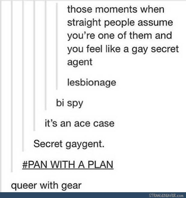 I'm a bi spy that's taking on an ace case