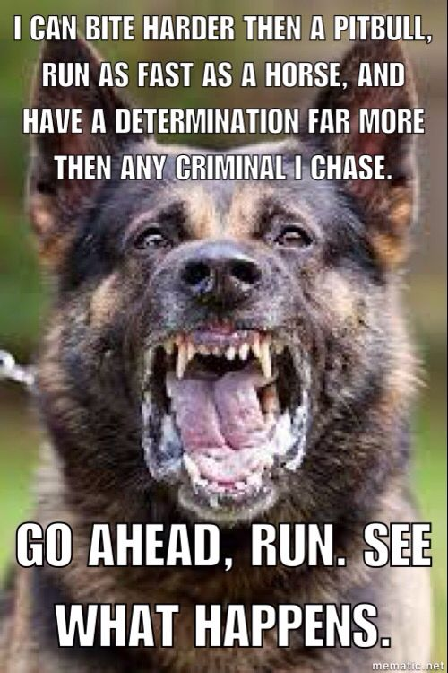 Yes, German Shepherds can bite harder then pitbulls. That's why they make such efficient cop dogs. Nat Geo tested the bite force of a pit, Rott, and GSD, and the German Shepherd came out as having more PSI then the Pit Bull.