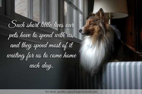 Such short little lives our pets have to spend with us, and they spend most of it waiting for us to come home each day.  #animals #cat #day #dog #home #little #live #most #pets #quotes #short #spend #waiting  ©2016 The Gecko Said – Beautiful Quotes