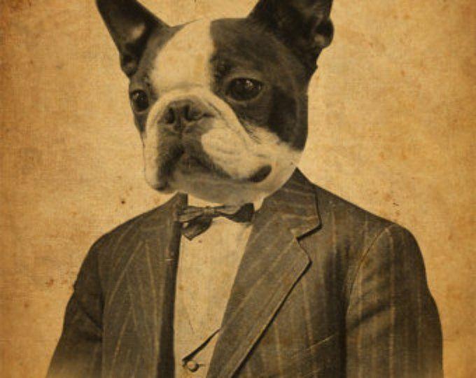 Raccoon In A Suit Portrait 8x10 Art Print Boston Terrier Art