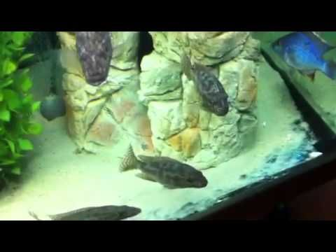 Check out these new aquael aquarium rock they look great!