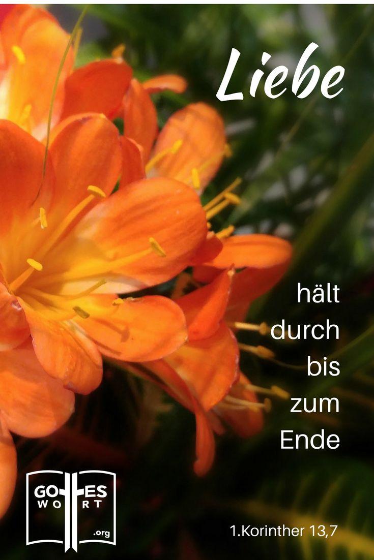 Liebe nimmt alles auf sich,3 sie verliert nie den Glauben oder die Hoffnung und hält durch bis zum Ende. 1.Korinther 13,7 http://www.gottes-wort.com/ehepartner.html     #gotteswort