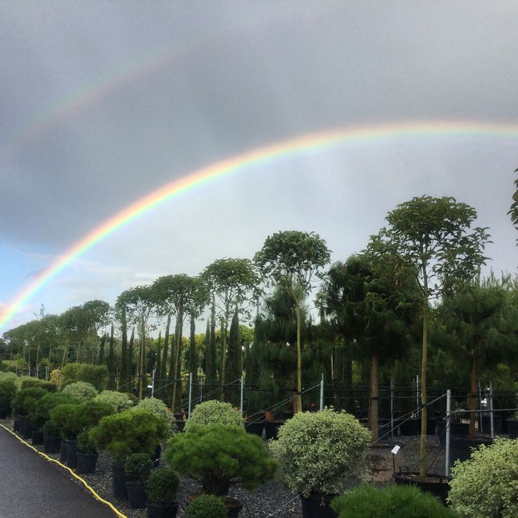 Somewhere over the rainbow......our nursery at Pulborough