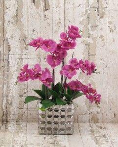 Purple Phal orchids silver vase