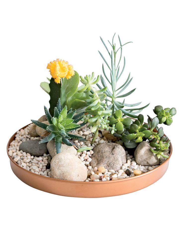 37 Best Images About Terrariums Succulents On Pinterest