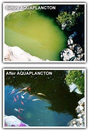 Pond Algae Control - AQUAPLANCTON: A Natural Solution for Ponds/Lakes