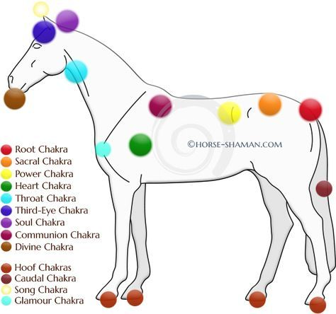 845 best hippotherapy is the best kind of therapy images on getting to the root of pain behavioral problems in horses part 3 equine major ccuart Gallery