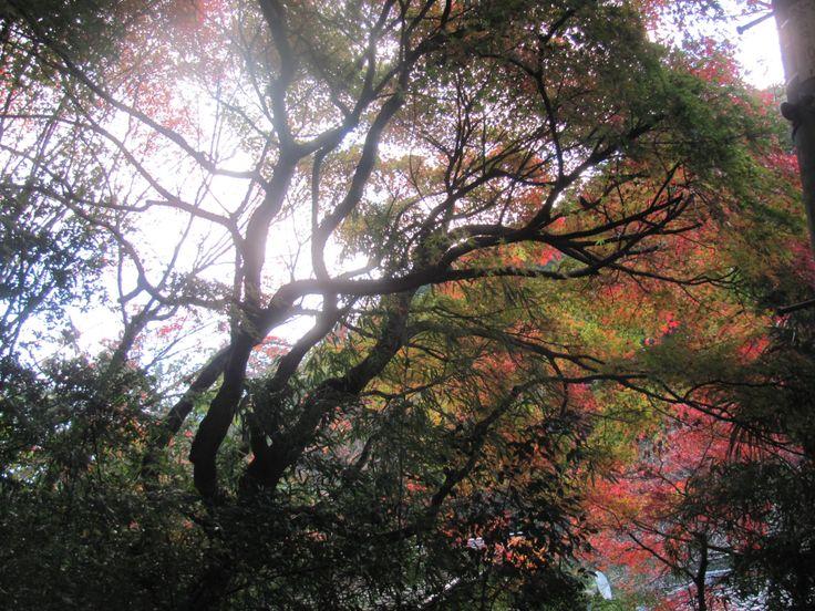 Near Kita-Kamakura stn.