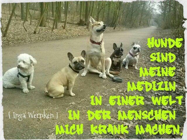 Hunde  sind meine Medizin  in einer Welt in der Menschen mich krank machen. [ Inga Wernken ]