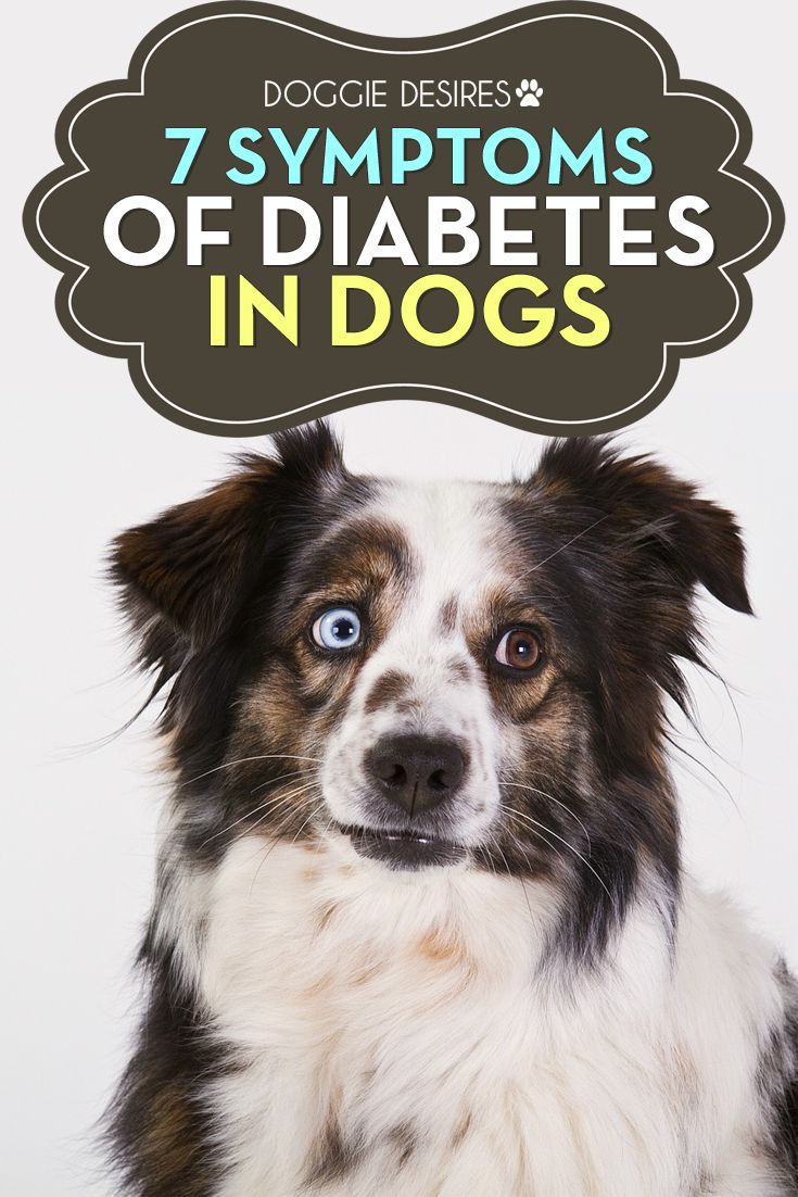 7 symptoms of diabetes in dogs >> http://doggiedesires.com/symptoms-of-diabetes-in-dogs/