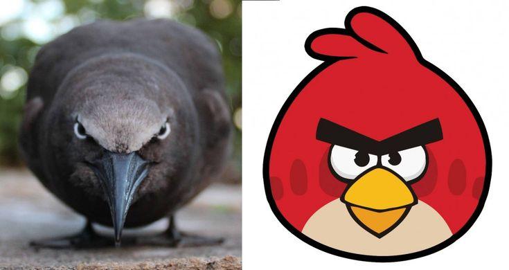 """Il vero """"Angry bird"""" esiste: vive nell'isola di Mauritius"""