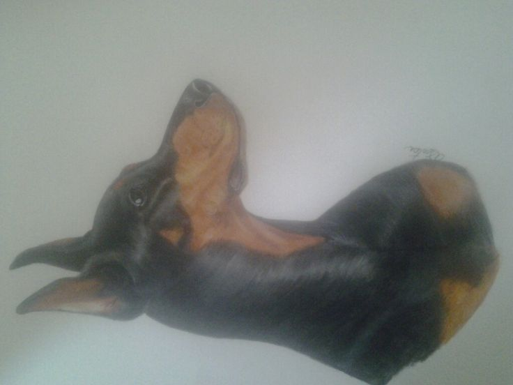 My favorite on so far ... Doberman .. prisma colored pencils