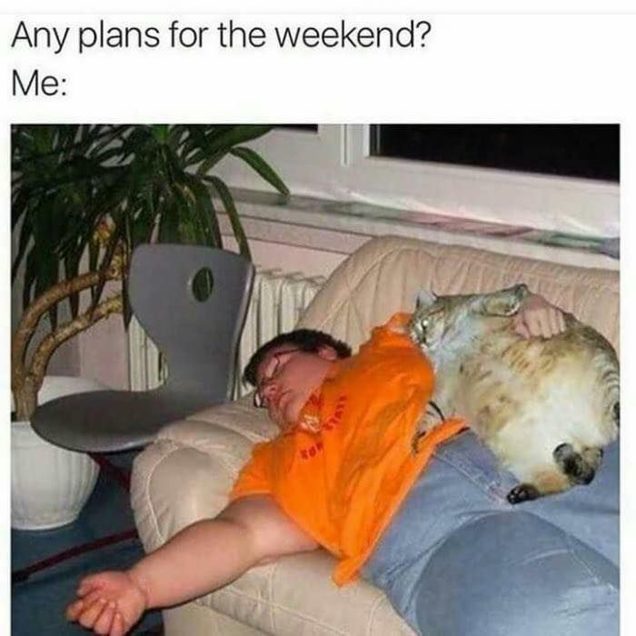 LOL! This is so funny! Click The Photo to see more #funnycats #catloverscommunity #catmemes #adorablecats