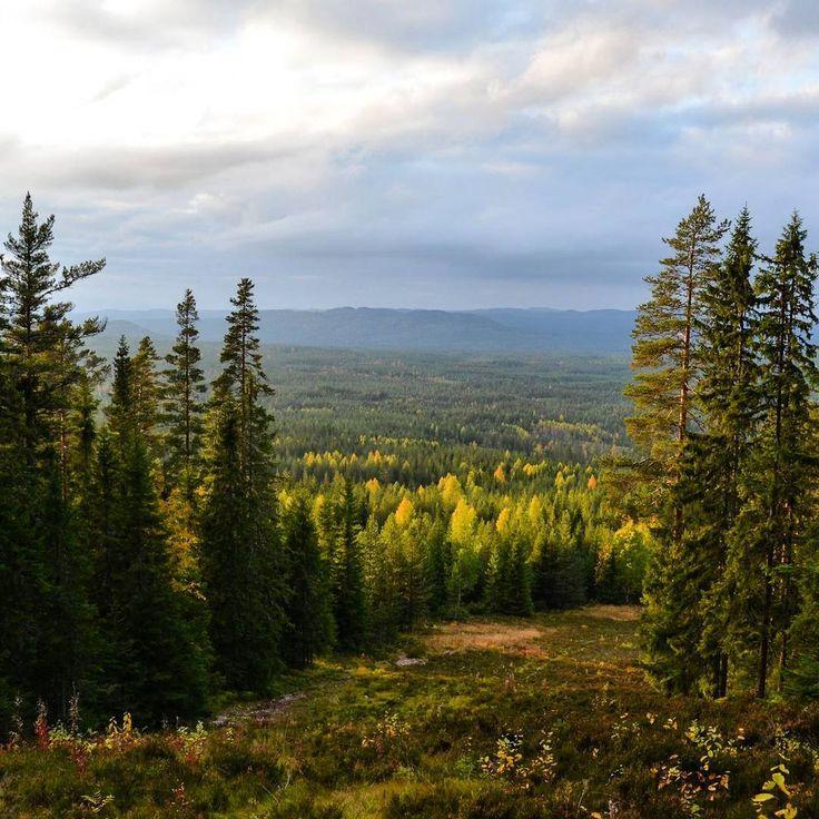 Autumn in Dalarna, Sweden Herbst auf dem Gesundaberget Birte Leonhardt Bogg (@by_addie) auf Instagram