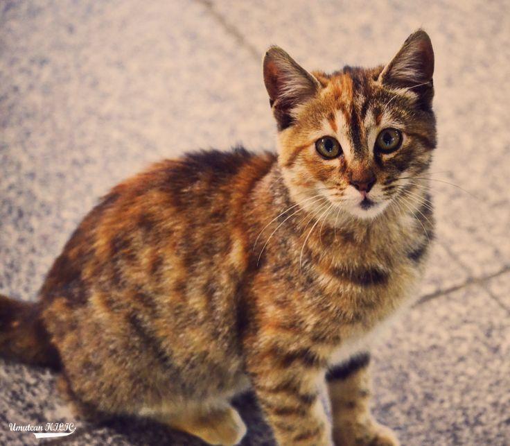 Bir kedinin masumiyeti :) Nikon d3100