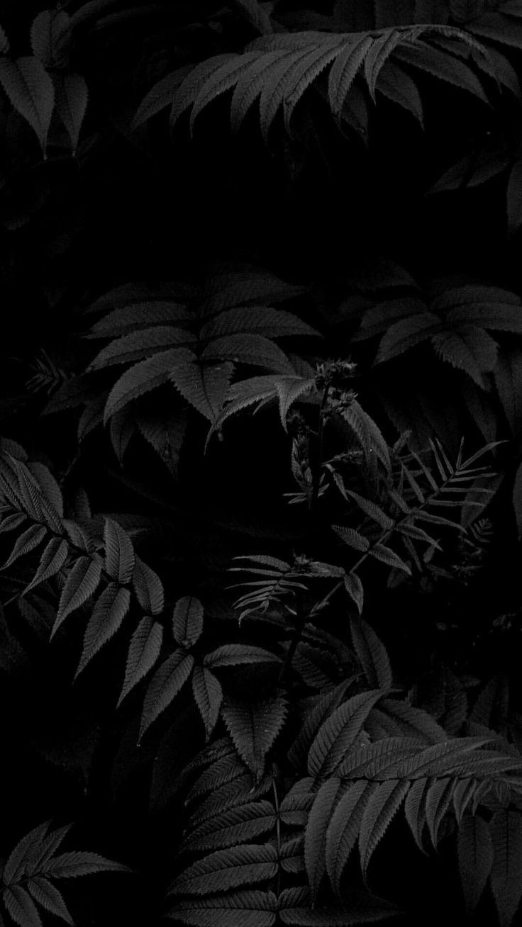 Темные картинки для фона телефона выбрали