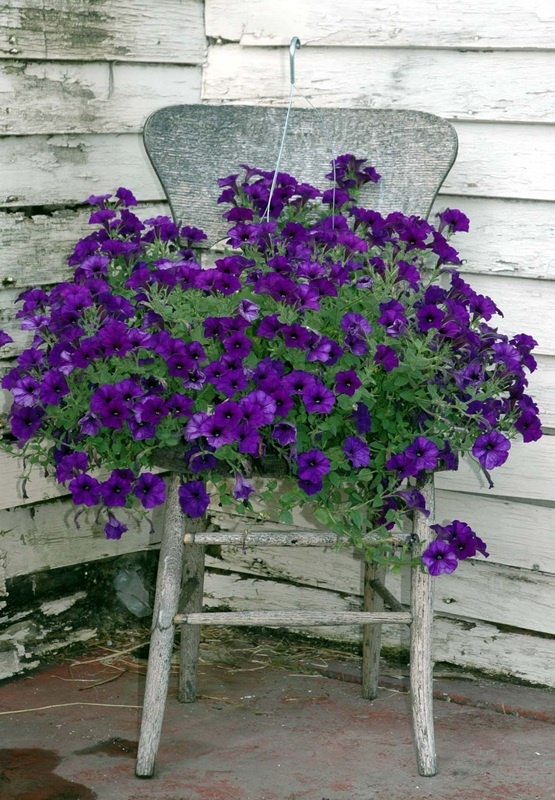 10 best images about chairs flowers planters on pinterest