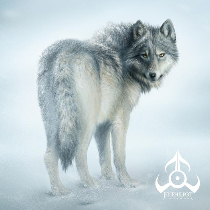 Amazing Wolf: 255 Best Images About Wolfs Art On Pinterest