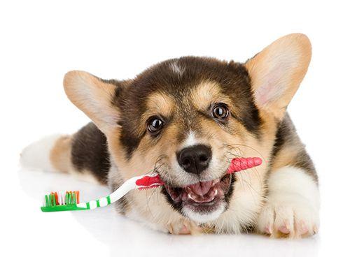 He aquí algunos consejos y trucos para facilitar la gratificante tarea de cuidar a tu mascota.