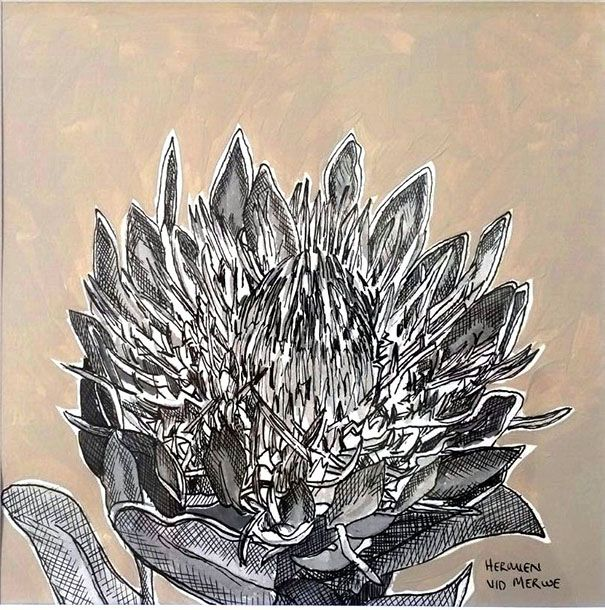 Hermien Van Der Merwe;  Title: Fynbos:  Table Mountain Fynbos 13 Medium: Pen-and-Ink drawing on paper with oil paint background Size: 200 x 200mm