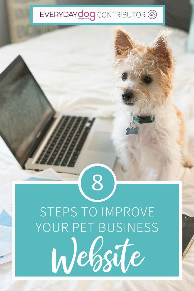 8 Steps To Improve Your Pet Business Website Pet Businesses