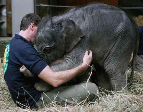 Baby elephant hug...orphan sanctuary.
