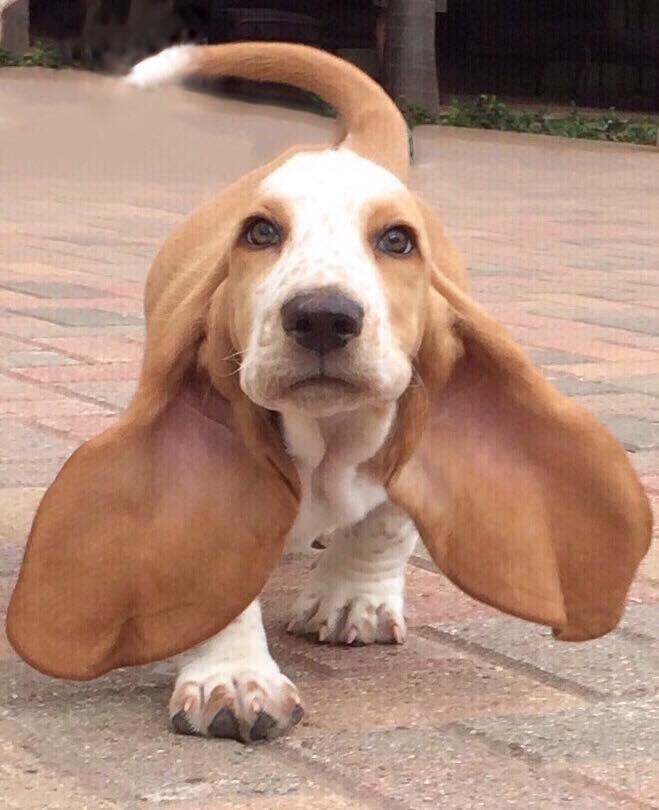 Those ears! <3