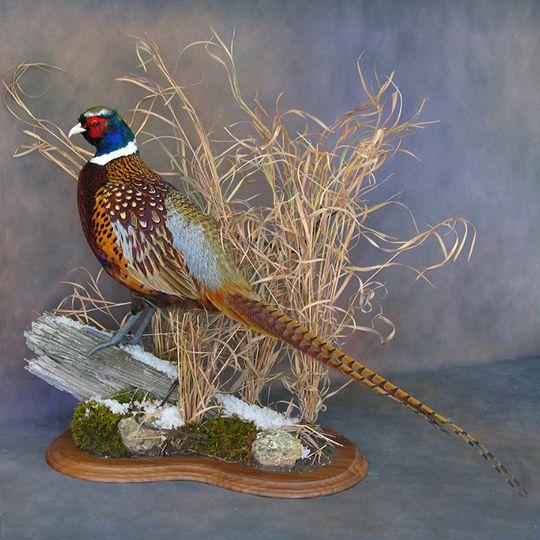 Pheasant Bird Mounts - Birds - Photo Galleries   Walnut Hollow - Country