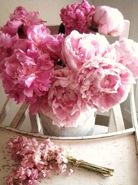 12 Best Images About Blossom Loves Peonies On Pinterest