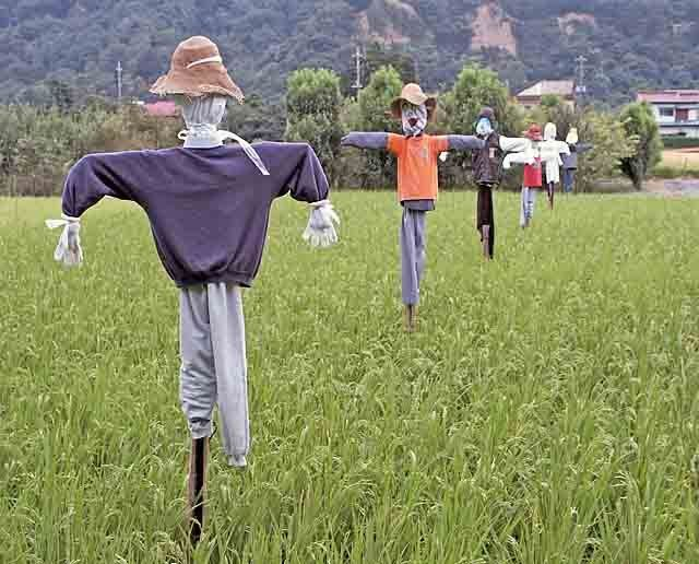 Row of scarecrows