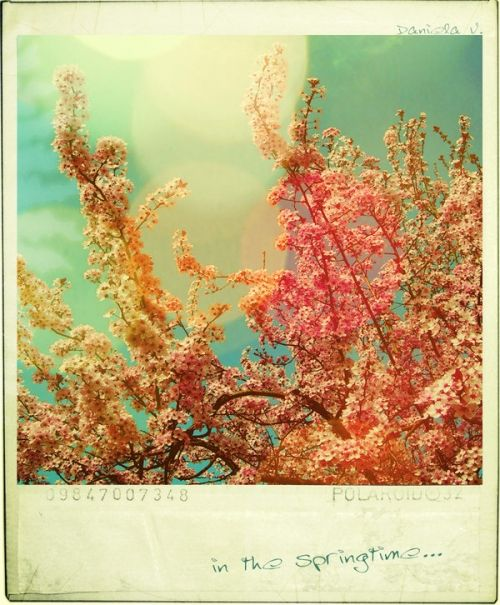 Repinned From Polaroid By