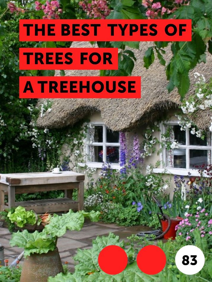 The Best Types Of Trees For A Treehouse Citronella Plant Plants